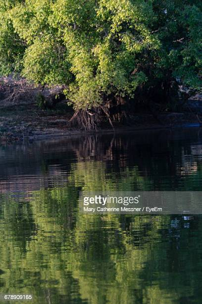 reflection of trees in calm lake - mary lake stock photos and pictures