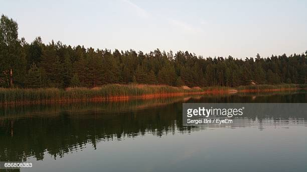 reflection of trees in calm lake - sergei stock pictures, royalty-free photos & images