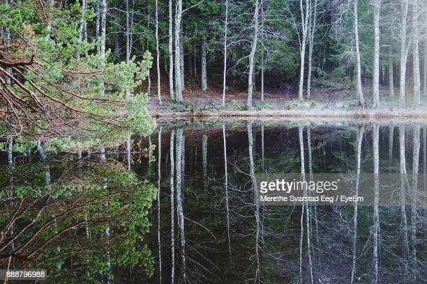 Reflection Of Trees In Forest