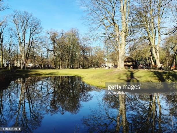 reflection of trees in lake against sky - bortes foto e immagini stock