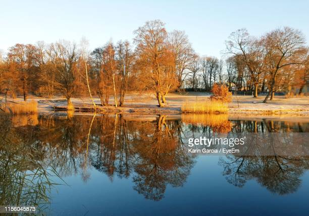 reflection of trees in lake against sky - karin garcia eyeem stock pictures, royalty-free photos & images