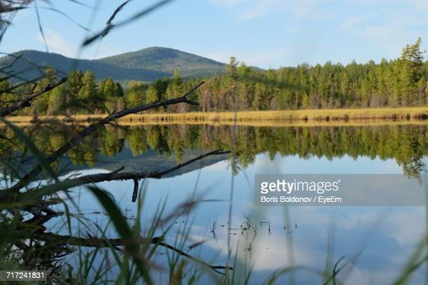 reflection of trees in lake against sky - boris stock photos and pictures
