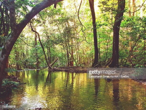 reflection of trees in lake against sky - ksi stock photos and pictures