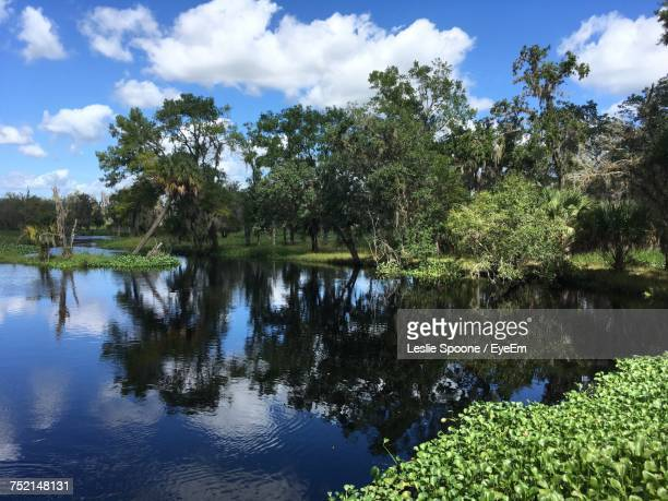 reflection of trees in lake against sky - sebring stock photos and pictures