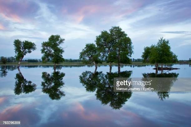 reflection of trees in lake against sky - idaho falls stock photos and pictures