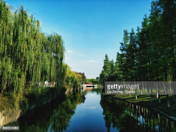 reflection of trees in lake against sky - changzhou stock pictures, royalty-free photos & images