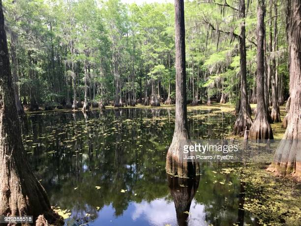 reflection of trees in lake against sky - tallahassee stock pictures, royalty-free photos & images