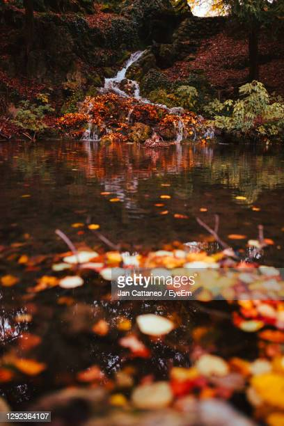 reflection of trees in lake during autumn - monza stock pictures, royalty-free photos & images