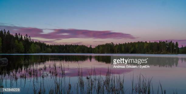 reflection of trees in lake during sunset - eriksen foto e immagini stock