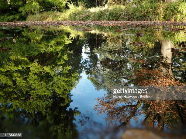 reflection of trees in lake - nancy green stock pictures, royalty-free photos & images