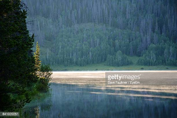 reflection of trees in lake - dave faulkner eye em stock pictures, royalty-free photos & images