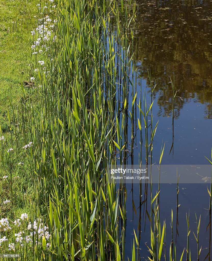 Reflection Of Trees In Lake : Stockfoto