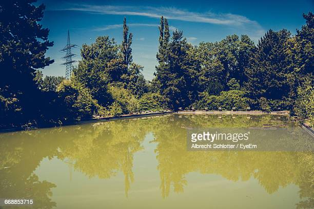reflection of trees in lake - albrecht schlotter stock photos and pictures