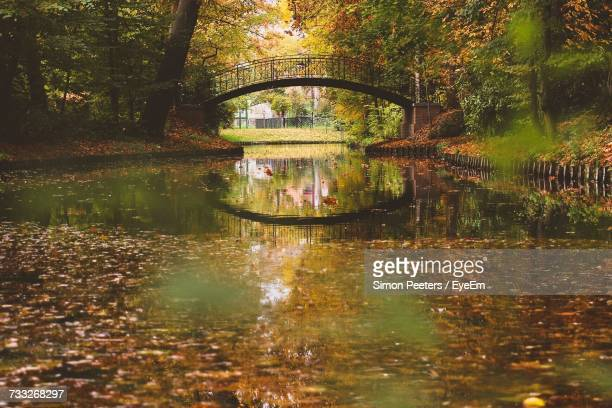 reflection of trees in lake - mechelen stock pictures, royalty-free photos & images