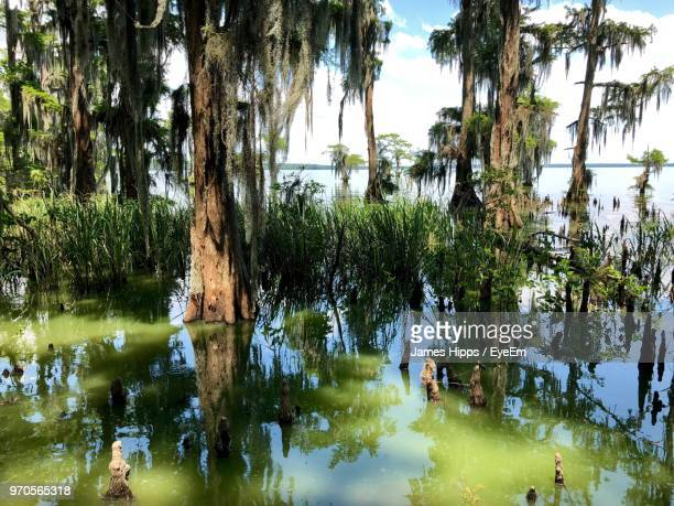 reflection of trees in lake - cypress swamp stock photos and pictures