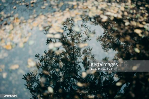 reflection of trees in puddle - aneta eyeem stock pictures, royalty-free photos & images