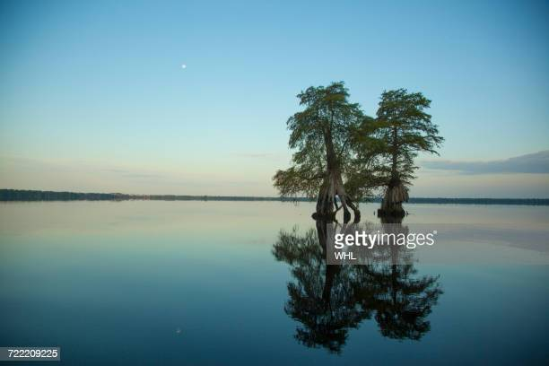 reflection of trees in river at sunset - bald cypress tree stock pictures, royalty-free photos & images