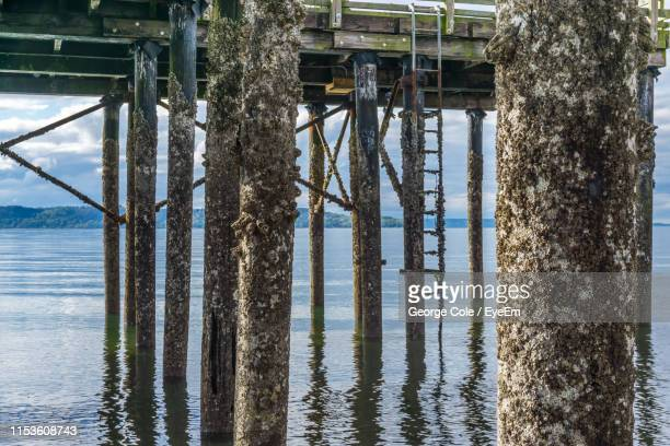reflection of trees in sea - barnacle stock pictures, royalty-free photos & images