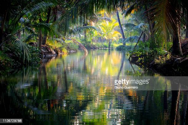 reflection of trees in water at kerala backwaters - kerala stock pictures, royalty-free photos & images