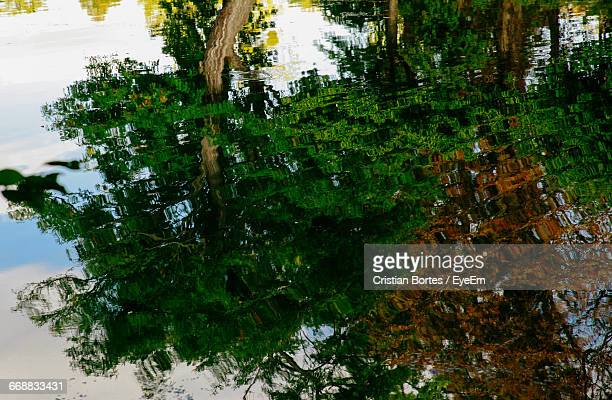 reflection of trees in water - bortes stock pictures, royalty-free photos & images