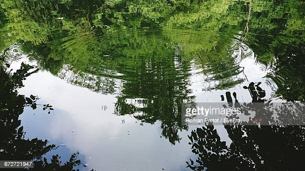 reflection of trees in water - roman pretot fotografías e imágenes de stock