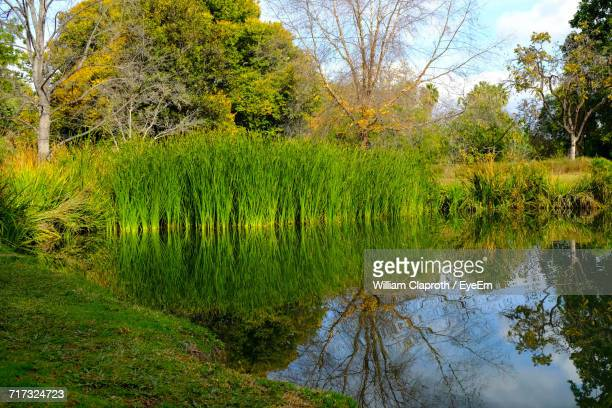 reflection of trees in water - fullerton california stock photos and pictures