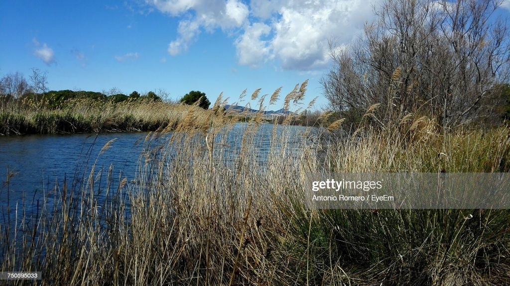 Reflection Of Trees In Water : Stock Photo