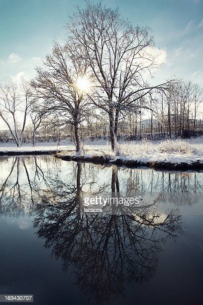 reflection of trees in winter