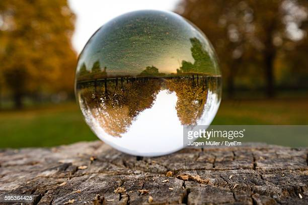 Reflection Of Trees On Crystal Ball During Autumn