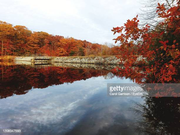 reflection of trees on lake during autumn - east hampton stock pictures, royalty-free photos & images