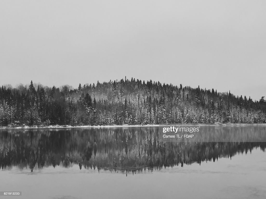 Reflection of trees on lake during winter : Stock Photo