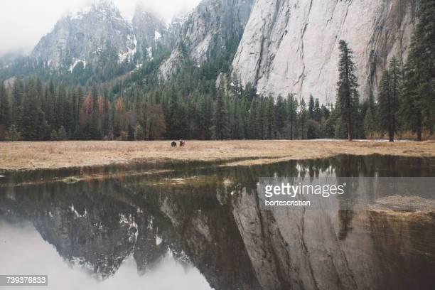 reflection of trees on landscape against sky - bortes foto e immagini stock