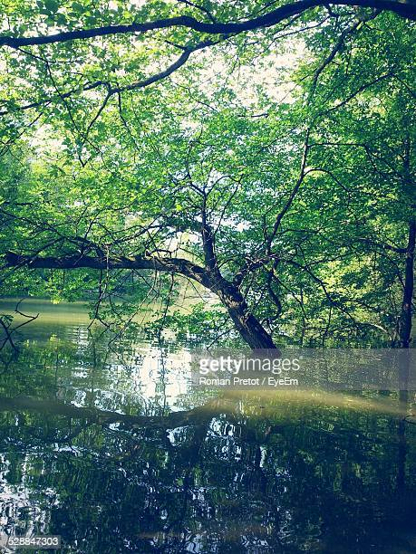 reflection of trees on river - roman pretot stockfoto's en -beelden