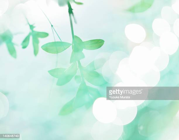 reflection of trees - purity stock pictures, royalty-free photos & images