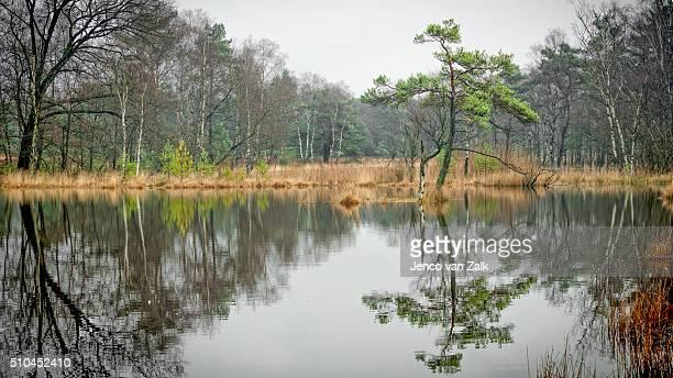 Reflection on a small lake