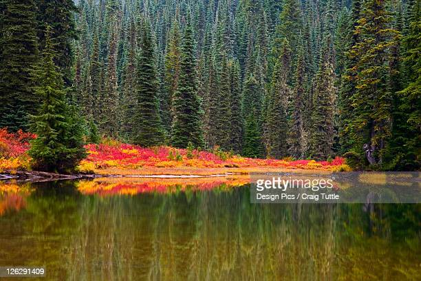 reflection on lake in autumn
