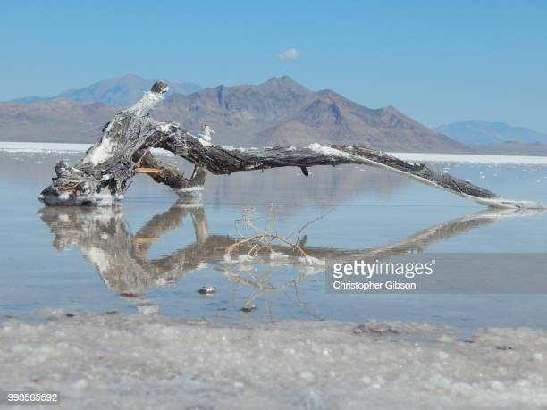Reflection on the Salt Flats