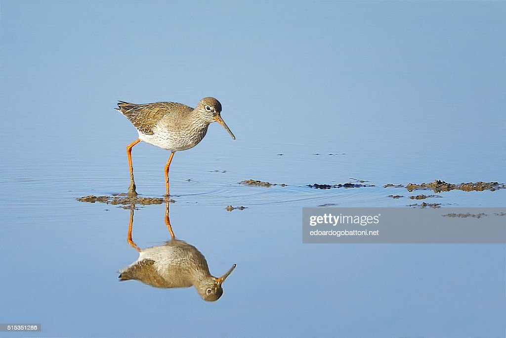 reflection : Foto stock