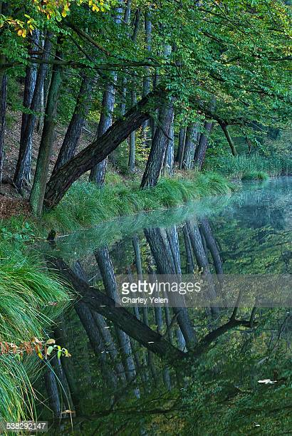 reflection - charley green stock pictures, royalty-free photos & images