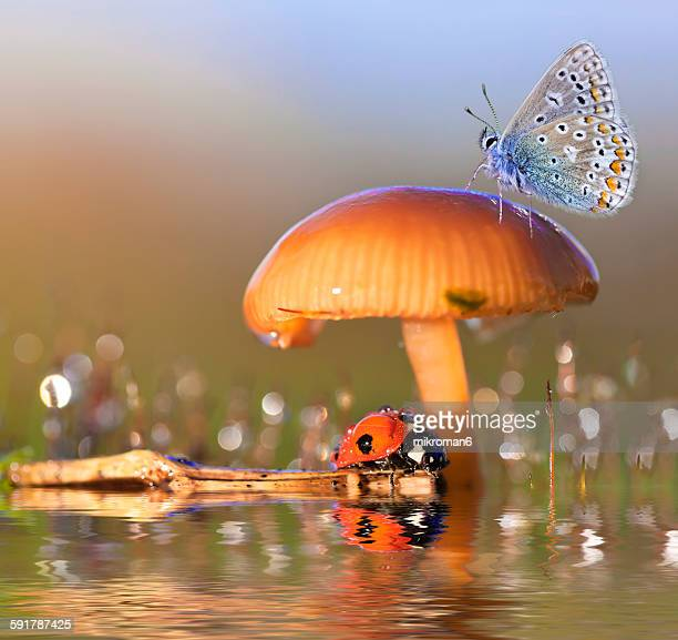 reflection - seven spot ladybird stock pictures, royalty-free photos & images