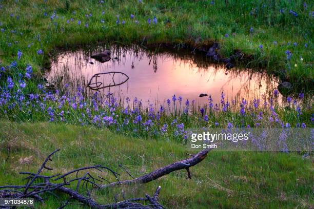 Reflection Pond and WIldflowers
