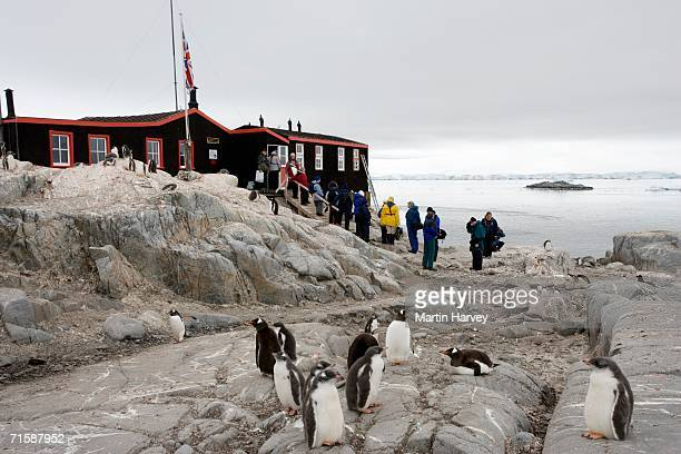 reflection tourists and gentoo penguin (pygoscelis papua) colony at base a - houses in antarctica stock pictures, royalty-free photos & images