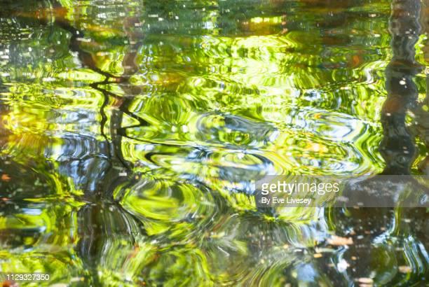 reflections in a lake - wasseroberfläche stock-fotos und bilder