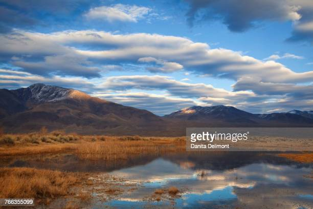 Reflections in marsh pond, Owens Valley, California, USA