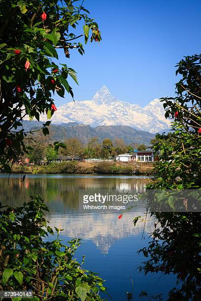 reflections in phewa tal pokhara nepal - machapuchare stock photos and pictures