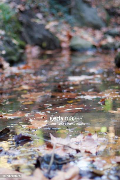 reflections in the creek - gras stock pictures, royalty-free photos & images