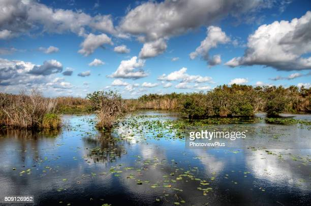 reflections in the everglades - salt_marsh stock pictures, royalty-free photos & images