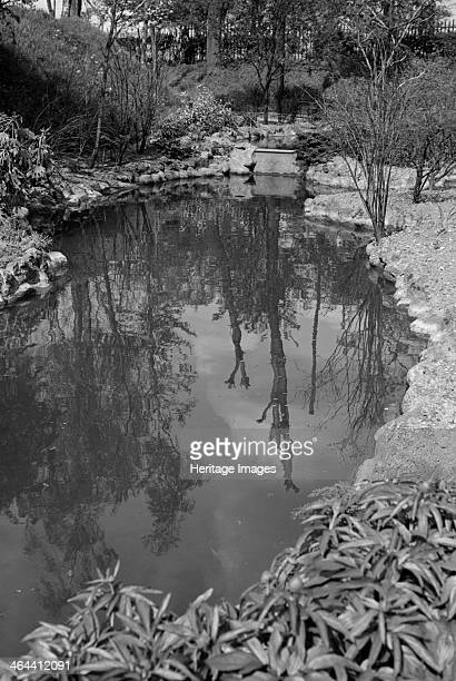 Reflections in the pond at Gravesend Gardens, Kent, c1945-c1965. Trees reflected in water. The gardens were laid out in the 1830s at a time when...