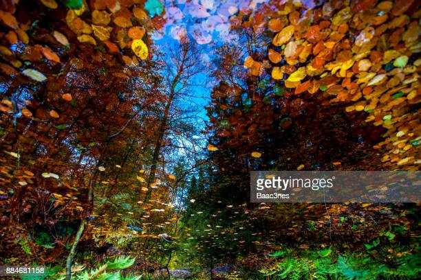 Reflections in water - Autumn in Norway