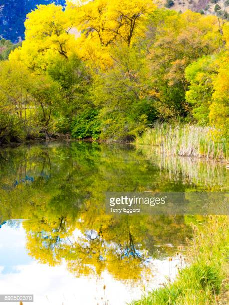 Reflections of Colorful aspens in Logan Canyon Utah in the autumn